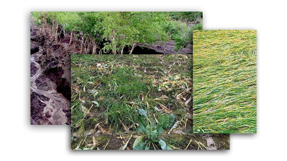 Crop Damage Assessment