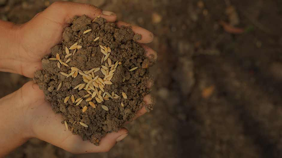 Digitisation and Traceability in the Seed Industry