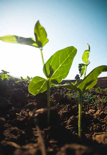Agriculture sustainability contributes to peace and prosperity