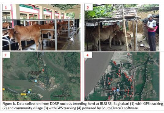 Bangladesh Livestock Research Institute (BLRI) 2