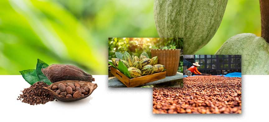 Cargill Cocoa and Chocolate – Cote d'Ivoire, Cameroon, Ghana 2-SourceTrace