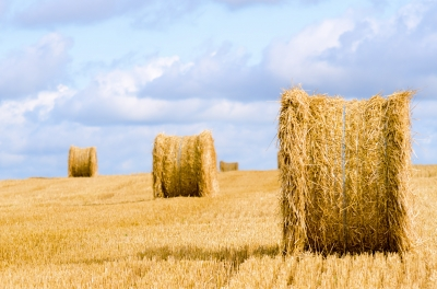 Nuts and Bolts: Farming data the organic way-SourceTrace