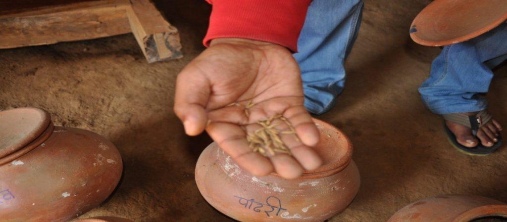 Rice intensification