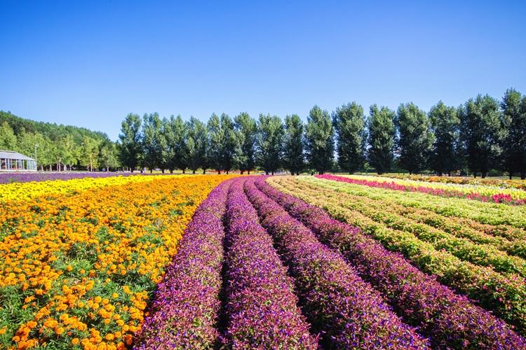 Floriculture Ethiopia