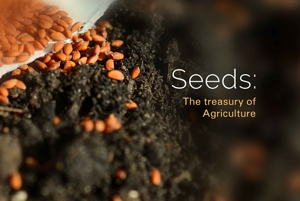 Seeds Treasury of Agriculture