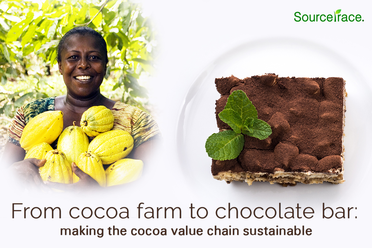 Cocoa farm to chocolate
