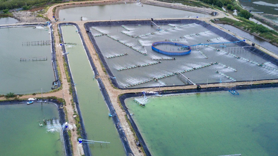 Blockchain for Aquaculture and Fisheries