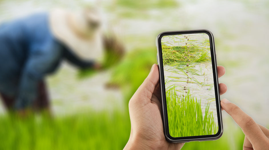 Digital Agriculture in Bangladesh