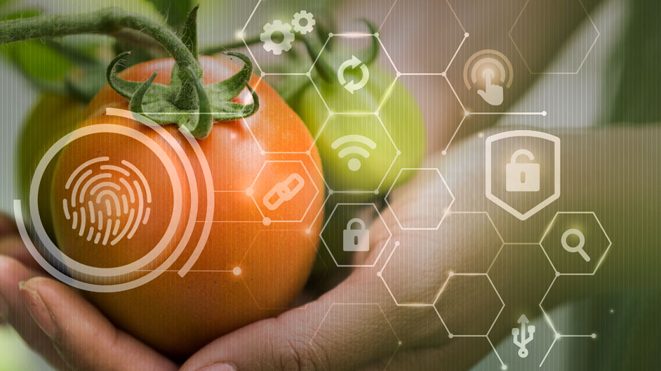 Smart Farming  and Quality Testing: Fool proofing the food value chain