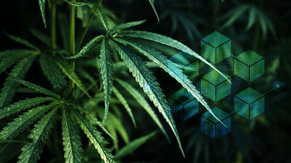 Blockchain Traceability for Legal Cannabis
