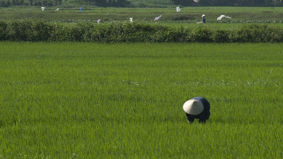 Code of Practice(COP) for Rice Crop Exports : what happens from paddy to platter?