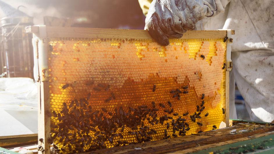 Tackling Honey Traceability