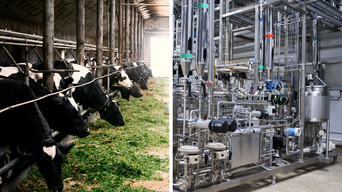 Farm to Fridge: Tracing the Complex Dairy Supply Chain